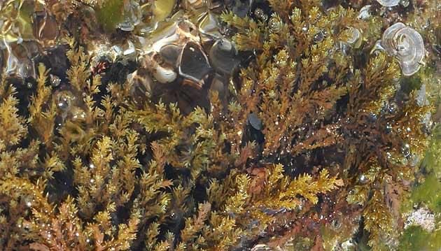 Cinco informes demuestran la sobreexplotación del Mediterráneo y la mala conservación de hábitats y especies