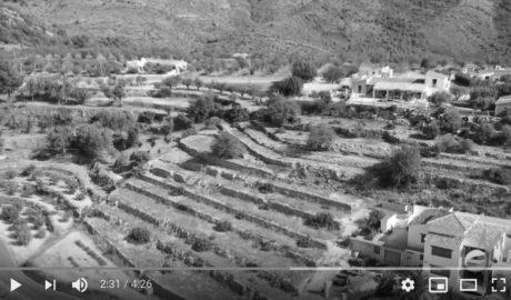 El VÍDEO que sobrevuela 11 pueblos de la Marina mutilados por la Xylella