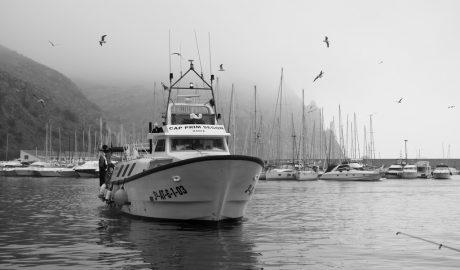 Dénia no sale a pescar, Calp sí y Xàbia a medias