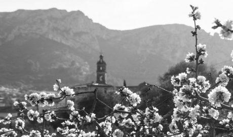 El mejor paisaje de cerezos en flor de España está en la Vall de Gallinera