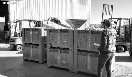 Investigadas 17 personas por falsificar documentos para vender 72 toneladas de naranjas robadas
