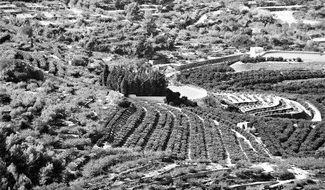 Efectos desastrosos pero también esperanzadores en la agricultura de la Marina Alta por la crisis